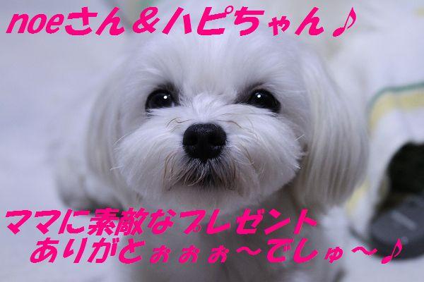 IMG_3744_20100611015656.jpg