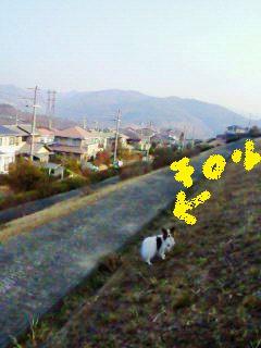 230203犬2