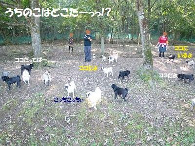 20111016_851008.jpg