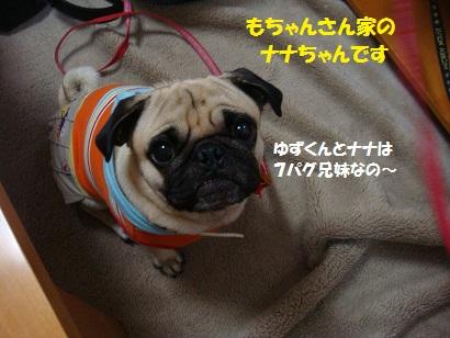 DSC01250 - コピー