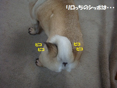 DSC00001_20120121165856.jpg