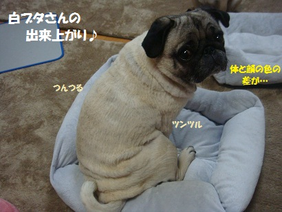 DSC00001_20120703183658.jpg