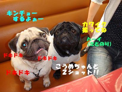 DSC00034_20120515023127.jpg