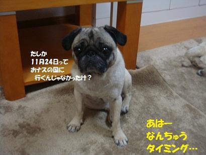 DSC00059_20120712045820.jpg