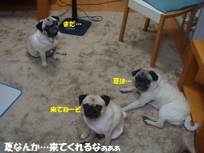 DSC00072_20120712050354.jpg