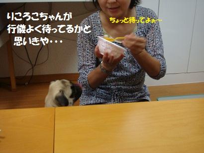 DSC00075_20120203220952.jpg