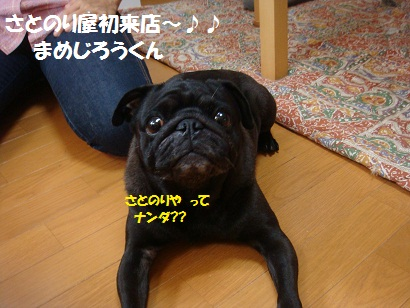 DSC00331_20120207015937.jpg