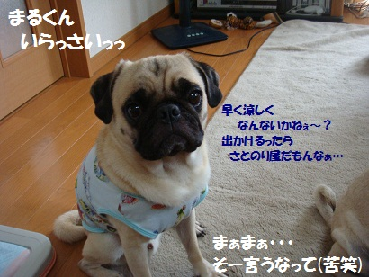 DSC00341_20120207015937.jpg
