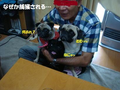 DSC00365_20120207205554.jpg