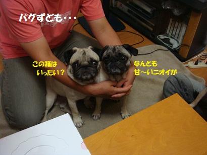 DSC00366_20120207205401.jpg