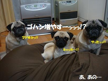 DSC00472_20120125031227.jpg