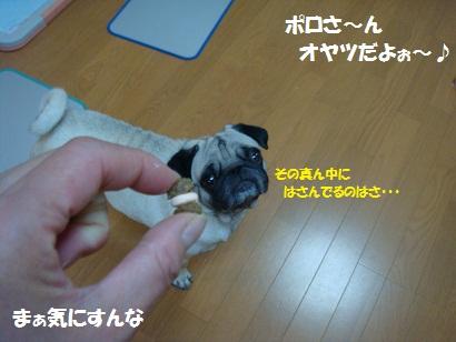 DSC00675_20120117041625.jpg