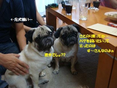 DSC00779_20120212025643.jpg