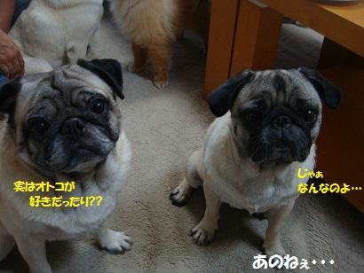 DSC00782_20120211032316.jpg