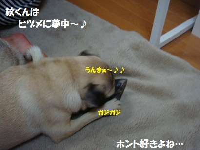 DSC00819_20120215013929.jpg