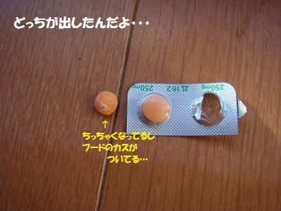 DSC00919_20120117041655.jpg