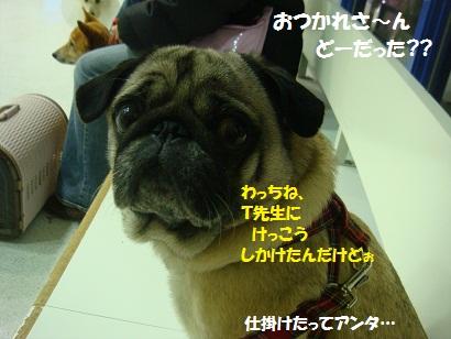 DSC00940_20120204202211.jpg
