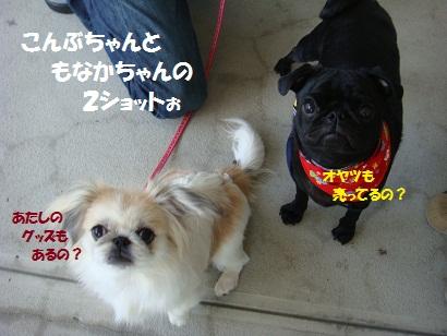 DSC00953_20120221235831.jpg