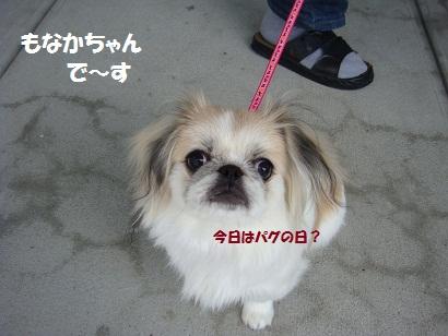 DSC00961_20120221235830.jpg