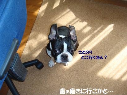 DSC01137_20120224014127.jpg