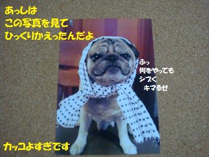DSC01186_20120207203122.jpg