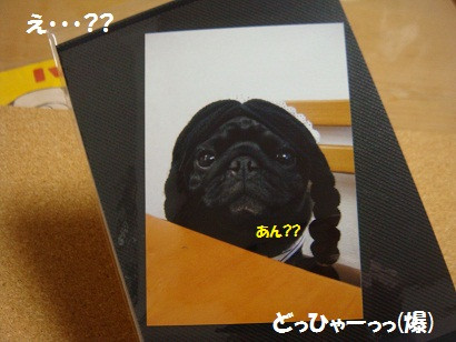 DSC01195_20120207203121.jpg