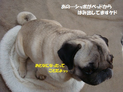 DSC01239_20120209182944.jpg