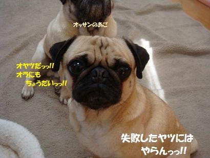 DSC01261_20120304042143.jpg