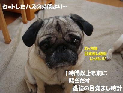 DSC01265_20120213202817.jpg