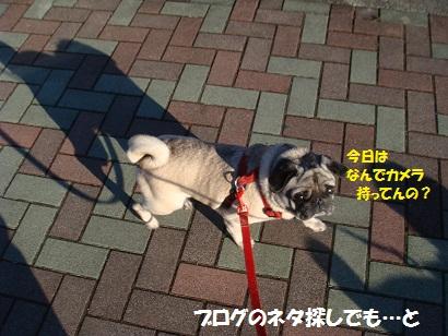 DSC01642_20120214031258.jpg