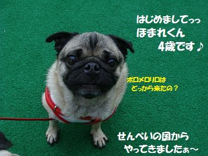 DSC01655_20120314232756.jpg