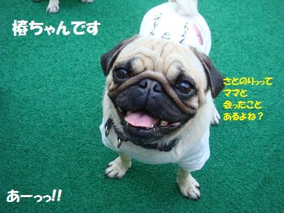 DSC01733_20120314044511.jpg