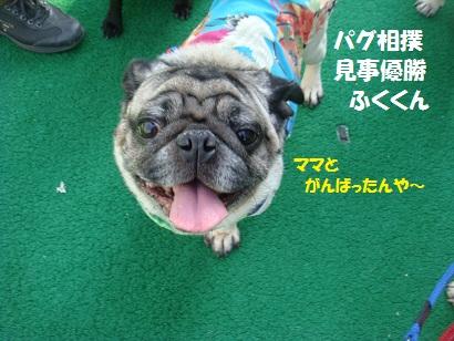 DSC01795_20120314051036.jpg