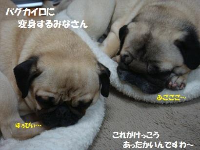 DSC01860_20120213002035.jpg