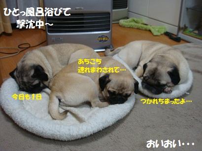 DSC01867_20120213002035.jpg