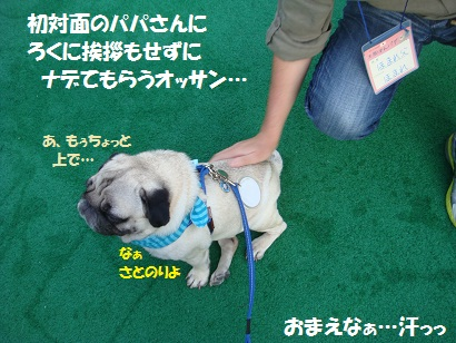DSC01920_20120312201834.jpg