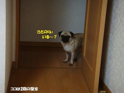 DSC01947_20120218030924.jpg