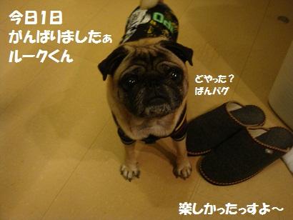 DSC01985_20120315013106.jpg