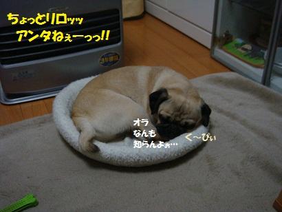 DSC02011_20120219031302.jpg