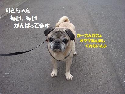 DSC02024_20120225221531.jpg