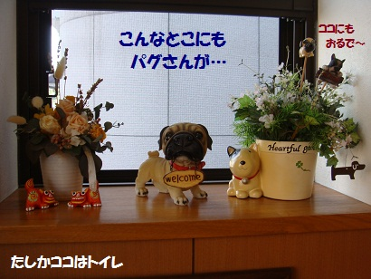 DSC02097_20120318030237.jpg