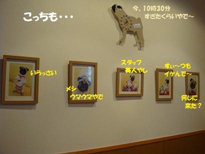 DSC02105_20120318015444.jpg