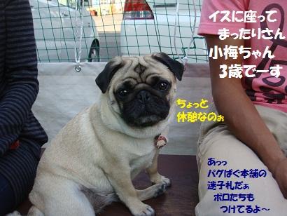 DSC02348_20120323084007.jpg