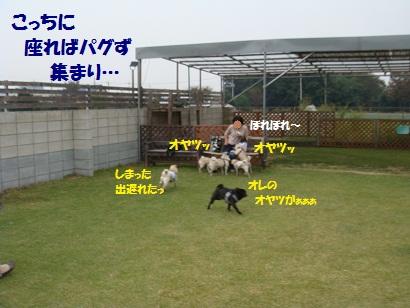 DSC02686_20120404015111.jpg