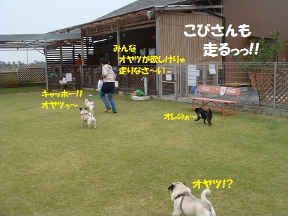 DSC02699_20120403200443.jpg