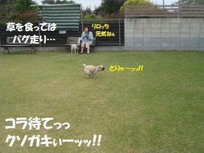 DSC02708_20120404020349.jpg