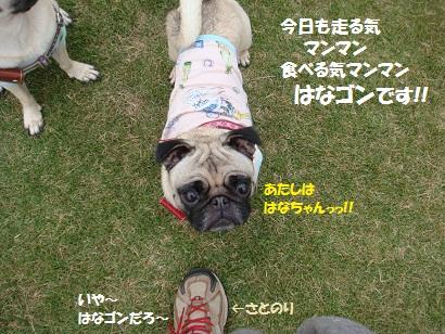 DSC02714_20120403181954.jpg