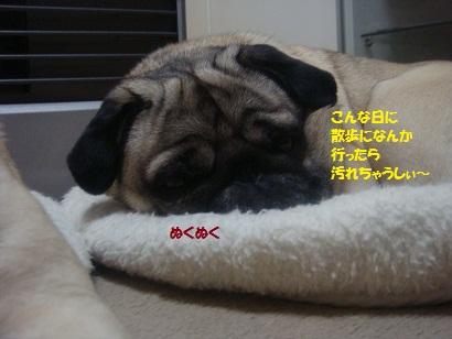 DSC02727_20120229200452.jpg