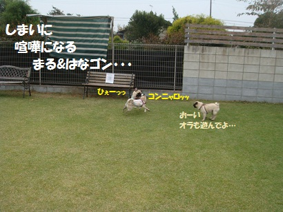 DSC02736_20120403201612.jpg
