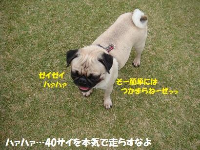 DSC02759_20120404023019.jpg